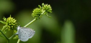 Evergreen lawn care testimonials
