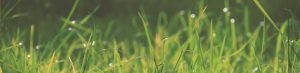 reviews of evergreen lawn care